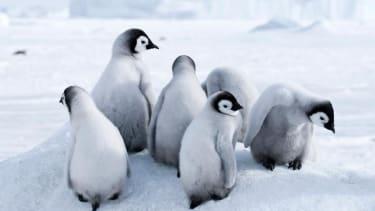 Scientists suggest Antarctica tourism could be making penguins sick