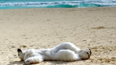 A climate change activist dons a polar bear costume to demonstrate on the beaches of Cancun.