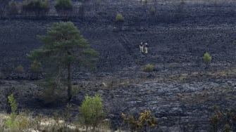A burned portion of Ashdown Forest.