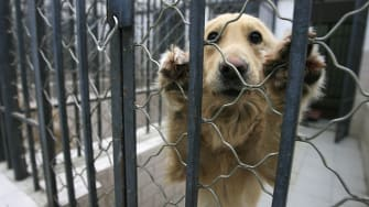 Congress is investigating experiments that may have harmed dogs.