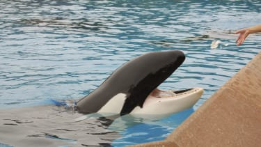 Will California ban SeaWorld's whale shows?