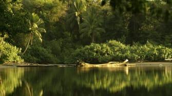 A river in Costa Rica.