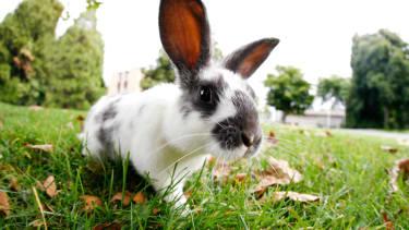 A rabbit that is sadly not named Marlon Bundo.