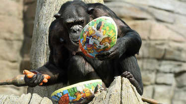 Photos: A German zoo just gave its animals a pretty great day