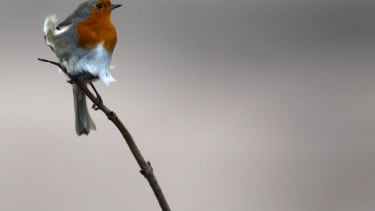 Climate change is changing how birds look.