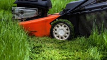 The right to not mow your lawn
