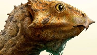 Scientists discover oldest horned North American dinosaur species in Montana