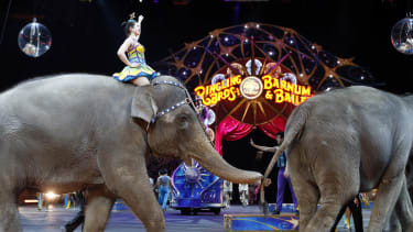 Elephants walk during a performance of the Ringling Bros. and Barnum & Bailey Circus