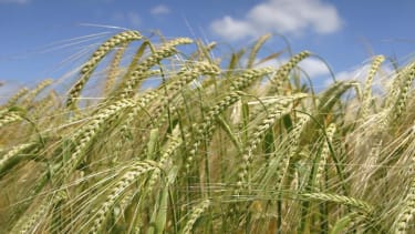 Study: There's way too much waste when it comes to growing crops