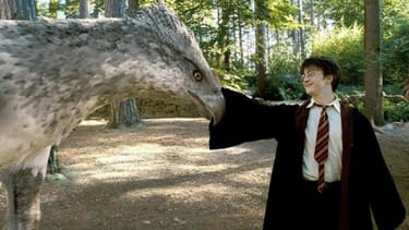Warner Bros. confirms a Harry Potter-spinoff trilogy is in the works