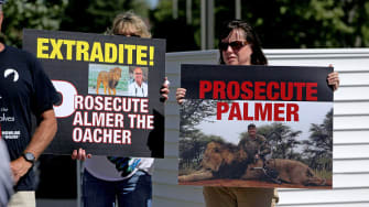 Memorial and protest for Cecil the lion