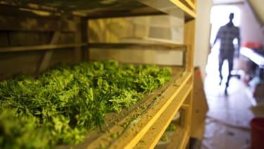 Scientists say California medical pot farms are draining streams