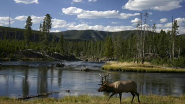 Tourist crashes drone into hot spring at Yellowstone National Park