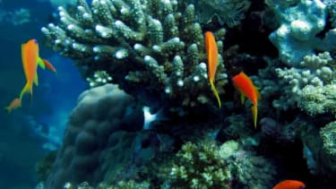 A coral reef with fish.
