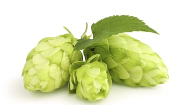 IPA fans, beware: Hops supply isn't meeting craft-brewer demand