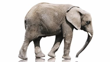 Researchers find that most mammals, big and small, need 21 seconds to urinate