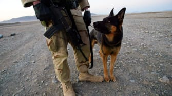 U.S. Soldier and Army Dog