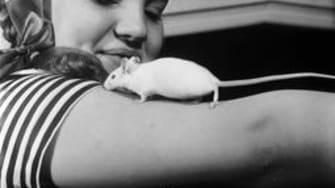Famous Cronut bakery Dominique Ansel just got shut down due to a severe mouse infestation
