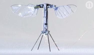 RoboBee X-Wing.