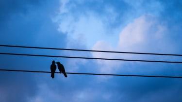 Sweet crows.