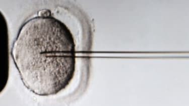 A sperm is injected into an egg cell: Freezing one's eggs can cost roughly $18,000 and some eager, would-be grandparents are helping their daughters pay the bill.