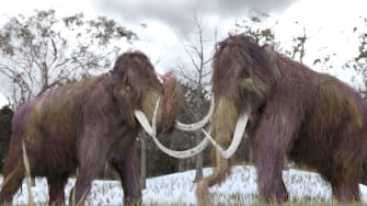 Woolly mammoths.