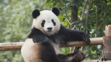 Listen to Richard Nixon discuss panda sex