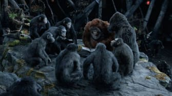 Actual chimps attend Dawn of the Planet of the Apes screening