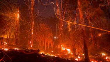 California's Thomas Fire
