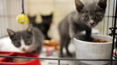 Kittens waiting to be adopted.