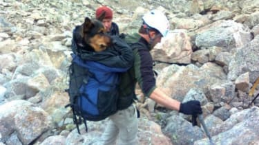 Two people hiking near the top of Mount Bierstadt in Colorado stumbled upon a wounded German Shepherd. The couple used the powers of the internet to get help for the stranded pup.