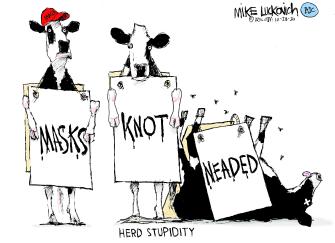 Editorial Cartoon U.S. MAGA Chik fil a cows COVID masks