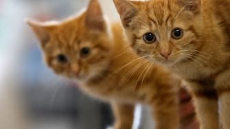 Cat brothers reunited after their owners meet on Tinder.