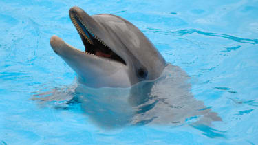 Study finds that dolphins may be able to detect magnetic fields