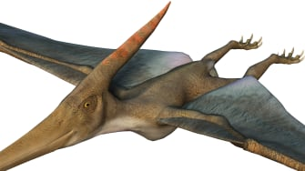 3-D rendering of a pterodactyl.