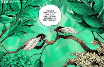 Political Cartoon U.S. cicadas giuliani