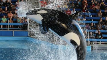 Fraternity brothers busted for allegedly breaking into SeaWorld to take selfies, eat Dippin' Dots