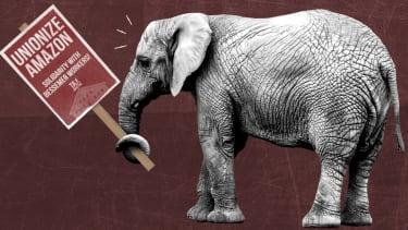 An elephant.