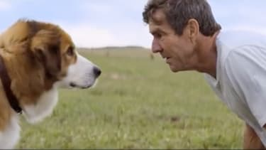 """A still from the trailer for """"A Dog's Purpose."""""""