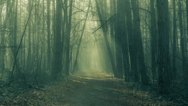 A foggy forest.