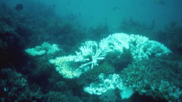 Damaged coral in the Great Barrier Reef.
