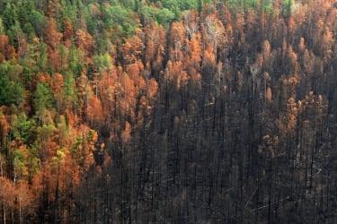 Wildfires in Siberia.