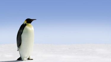 Researchers find new, massive penguin fossils in Antarctica