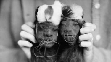 An anthropologist holds male and female shrunken heads from Ecuador.