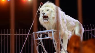 Mexican government passes bill to ban circus animals