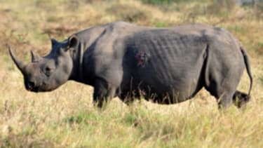 Kill a rhino — for conservation!