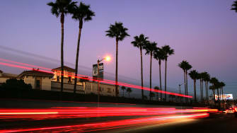 Palm trees in California.