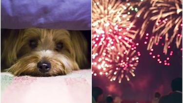 Dogs hate fireworks