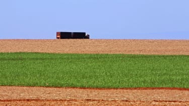 A truck drives past sugarcane.