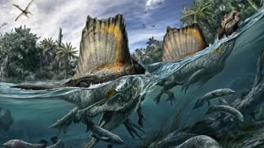 Enormous Spinosaurus was likely the first dinosaur to swim — 97 million years ago
